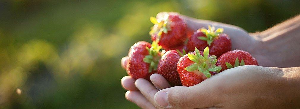 jordgubbar-hander1010x367